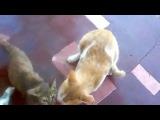 Три кошки и стейк