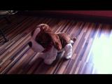 Видео обзор Мягкая игрушка - Танцующая ЧУДО-Собака :) (kidtoy.in.ua)