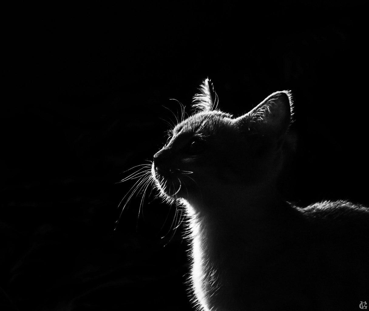 """Фотоконкурс """"В мире животных"""""""