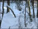 Тропой волка дикий мир и поведение животных в нем