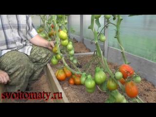 Оранжевый трюфель