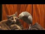 Говорящий попугай))Советую посмотреть,ржачное видео!):-Р
