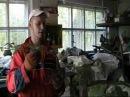 Кумберленд Размножение ежевики малины укоренение побегов