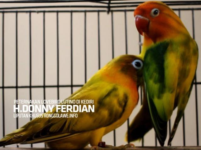 KISAH SUKSES Panen Duit Milyaran Tiap Bulan Dari Ternak Lovebird