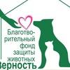 """Приют """"Верность"""" Набережные Челны-Елабуга"""