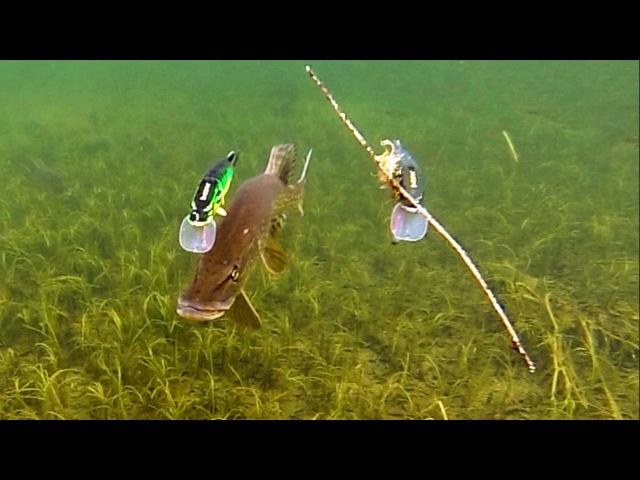 Pike attack Mike Ricky fishing lures. Gäddfiske. Рыбалка щука атакует рыболовные приманки