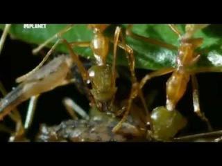 Войны жуков гигантов 6
