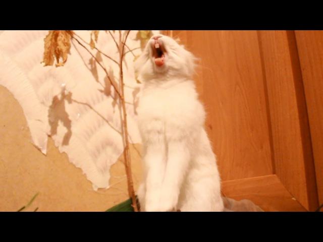 Кролик кричит (ржач)