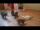 Мои кошки обожают играть с лазерной указкой