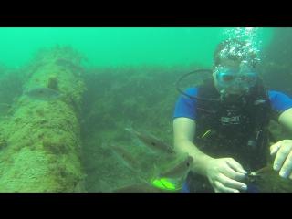 Дрессировка рыбок