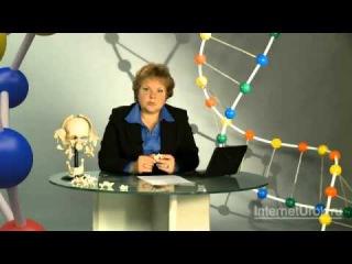 Скелет головы и туловища | урок 19, биология 8 класс