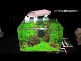 Искусство растительного аквариума 2015 - Dennerle Scaper's Tank