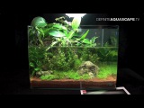 The Art of the Planted Aquarium 2015 - Scaper's Tank (Nano) category, part 3