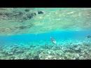 Красное море. Пляж отеля Shores Amphoras, Шарм-эль-Шейх, Египет. 21.02.2014