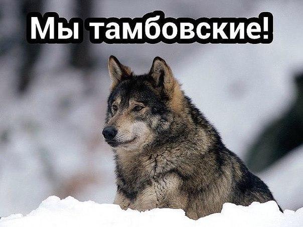 http://cs625330.vk.me/v625330093/4bd25/u0kyKugfUvE.jpg