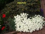 Вот такие красивые клумбы сделали дачники из почвопокровных растений