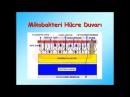 TUSDATA Nisan 2015 Mikrobiyoloji (1. Deneme)