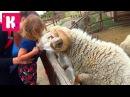 Прогулка по Ранчо Дядюшки Бо / кормим домашних животных