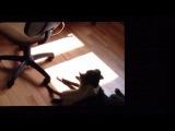 Кот жестоко напал на собаку