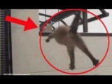 Funniest TOP 5 Cats Suicide Cats Jump Fail Kitty Funny
