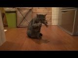 Cats harp beatbox