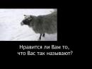 Настоящий смысл слов-паразитов в Русском языке