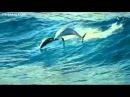 Шикарный релакс! Дельфины шикарная музыка!