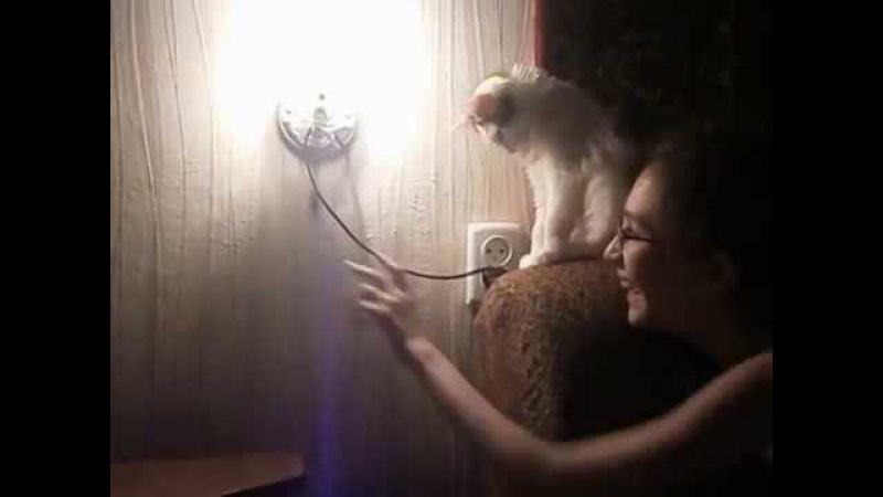 Котенок дрессирует девочку. To train a kitten girl