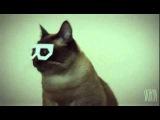Дабстеп хипстер кот Скифча ( Dubstep hipster cat Skifcha )