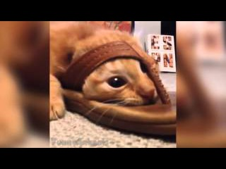 Ultimate Funny Animals Vines Compilation