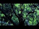 Лесной релакс, звуки природы HD с музыкой