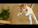 Epic Funny Cats Jump Fail - Part 1