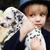 Фото- проект с щенками далматина