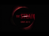 Штамм. 1 сезон. Трейлер (рус) / The Strain. Season 1. Trailer (rus).