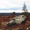 Карельские пословицы • Karjalan sananpolvet