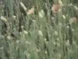 004 Артур Эйзен - Партизан Железняк