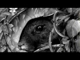 Watership Down - O Death