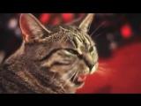 Приколы про животных  Кот мяукает, под тяжёлый рок