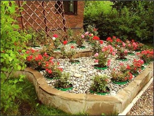Красивые клумбы на даче из роз