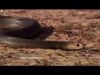 Смертельно Опасные Животные. Австралия Хищники Которых Стоит Опасаться! Дискавери фильмы. дикий мир и поведение животных.
