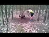 Дикий баран застрял в лесу