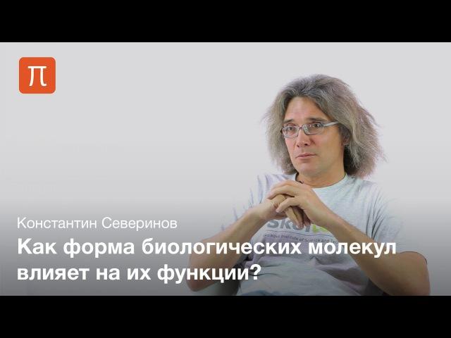 Взаимодействие макромолекул — Константин Северинов