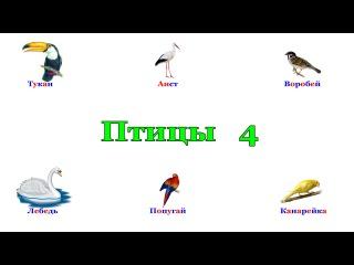 Птицы в картинках. Часть 4. Карточки Домана