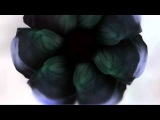 SHOWstudio Dynamic Blooms by Nick Knight and Tell No One