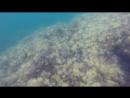 Подводный мир Черного моря, Новый свет, Тропа Голицына