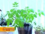 Растения и цветы для офиса  автополив ОлДжи
