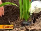 Автополив растений на даче олДжи