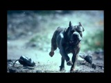 FOALS - What Went Down Official Music Video