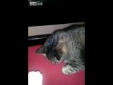 Кот откусил слишком большой кусок мороженого » Невседома - ж