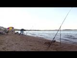 Ловля сазана. Рыбалка на Шардаре. 1 день соревнований.